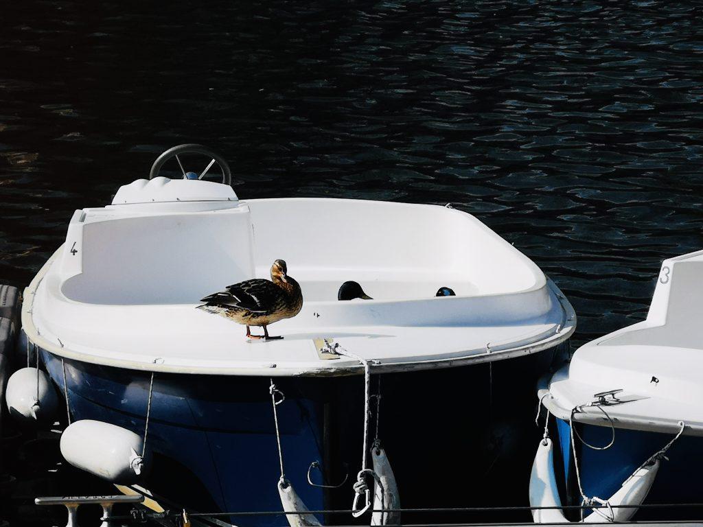 Au fil de l'Orne-bateau électrique-base nautique-caen-loisirs-normandie